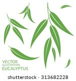 eucalyptus. isolated leaves on... | Shutterstock .eps vector #313682228