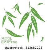 eucalyptus. isolated leaves on... | Shutterstock .eps vector #313682228