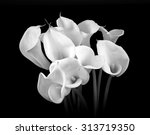 calla lilies close up on black... | Shutterstock . vector #313719350