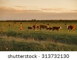 cow herd in sunset | Shutterstock . vector #313732130
