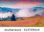 sunny summer morning in the... | Shutterstock . vector #313749614