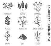 fresh herbs and spices icon set.... | Shutterstock .eps vector #313888439