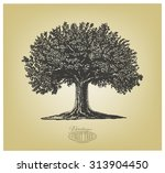 Tree In Engraving Style. ...