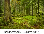 lush rainforest in the... | Shutterstock . vector #313957814