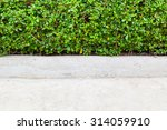 green bush. green leaves wall... | Shutterstock . vector #314059910
