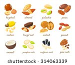 cartoon nuts set   hazelnut ... | Shutterstock .eps vector #314063339