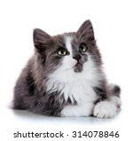 Stock photo gray kitten isolated on white 314078846