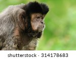 monkey sitting on the bench | Shutterstock . vector #314178683