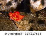 Solitary Leaf Trapped In The...