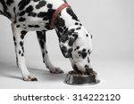 dalmatian dog eating dry food...   Shutterstock . vector #314222120