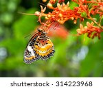 Closeup Butterfly Beautiful...