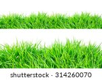 green grass on white background.