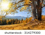Autumn Landscape In The...