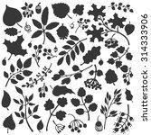 vector autumn leaf and berries... | Shutterstock .eps vector #314333906