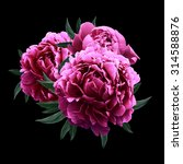 Pink Peonies Close Up Isolated...