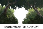 tree painting | Shutterstock . vector #314645024