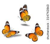 Set Flying Orange Butterflies Plain - Fine Art prints