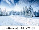 winter tree in snow | Shutterstock . vector #314791100