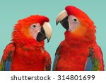 Stock photo macaws 314801699