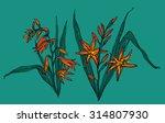crocosmia flower in blossom.... | Shutterstock .eps vector #314807930