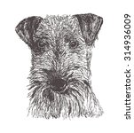 Airedale Terrier Dog On White...