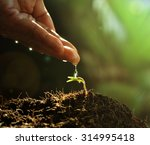 hand watering to small  plant... | Shutterstock . vector #314995418