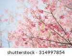 sakura flower or cherry blossom ... | Shutterstock . vector #314997854