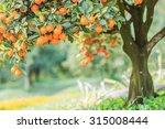 orange   orange tree orange... | Shutterstock . vector #315008444