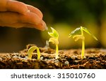 plant seed growing concept ... | Shutterstock . vector #315010760