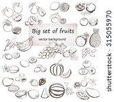vector illustration of fruits... | Shutterstock .eps vector #315055970