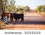 A Group Of Cows Graze By The...