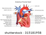 anatomy of human heart | Shutterstock .eps vector #315181958