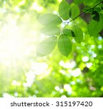 sun beams and green leaves   Shutterstock . vector #315197420