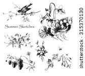 Set Summer Sketches. Forest...