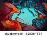 autumn background with colorful ...   Shutterstock . vector #315384584