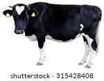 holstein cow | Shutterstock . vector #315428408