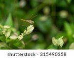 Macro Dragonfly Dragonfly...