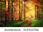 autumn forest scenery with rays ... | Shutterstock . vector #315523706