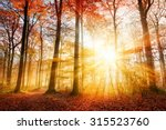 warm autumn scenery in a forest ... | Shutterstock . vector #315523760