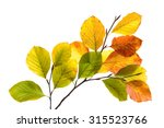 Twigs With Colorful Leaves Of A ...