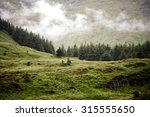 low cloud over a pine forest in ... | Shutterstock . vector #315555650