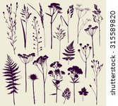Set Of Illustrations Of Plants...