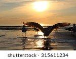 birds on the sunset. seagulls...