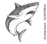 shark vector illustration. | Shutterstock .eps vector #315694814