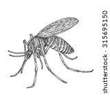 mosquito | Shutterstock .eps vector #315695150