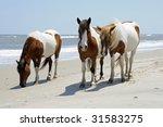 The Wild Horses Of Assateague...