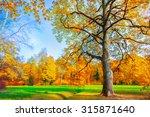 golden frame   Shutterstock . vector #315871640