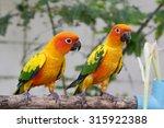 bright yellow parrot | Shutterstock . vector #315922388