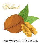 walnuts with leaves and kernel... | Shutterstock .eps vector #315945236