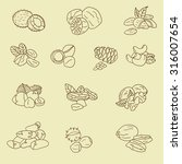 nuts icon set vector. doodle... | Shutterstock .eps vector #316007654